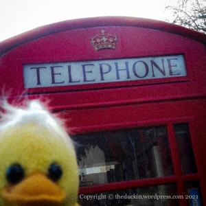 telephone duck