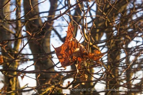 late winter walks 2