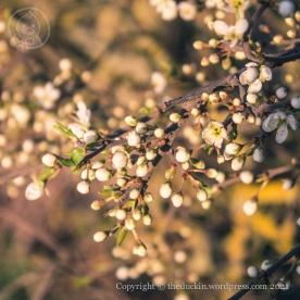 Spring 2021 - seven